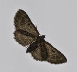 IMG_1771 Moth on window