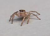 SIL40083 A face even an arachnophobe could love