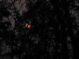 P1110513 Eerie Sun