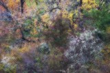Foliage Blending