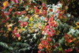 Wet Foliage #3