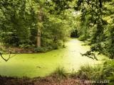 Camlet Moat - Trent Park
