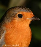 Robin (Macro)