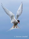 Gulls, Terns & Tubenoses