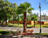 Calle palmas