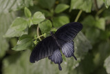 Papillons en liberté 2013