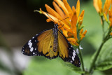 Papillons en liberté 2014