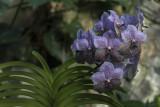 Orchidées - Orchids