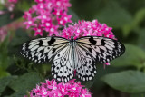 Papillons en liberté 2015
