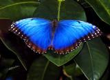 Wings that Glow
