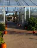 Path to the Greenhouse