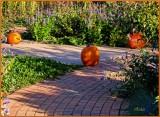 Pumpkins on the Path
