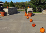 Pumpkins By Day