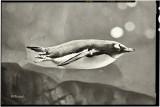 Underwater Torpedo