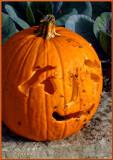 Flies on the Pumpkin