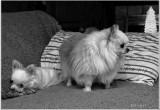 Puffkin & Bailey