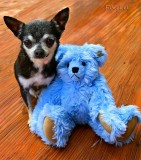 Dana and the Blue Bear