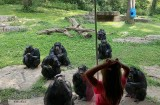Chimps Behind Glass