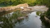 KC Hippo Habitat