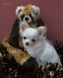 Bailey & the Red Panda