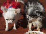 Bailey & Furby