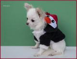 Bailey in her Penguin Hoodie