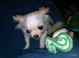 My Cupcake!!!