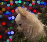 Christmastime is Magic