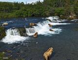 8 Bears