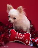 Irresistible Valentine