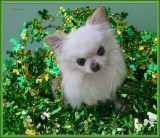 May the Luck of the Irish 2016
