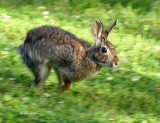 Run, Run, Rabbit