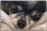 Sleepy Old Boy