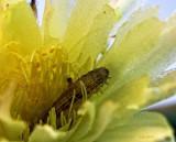 Caterpillar in the Cactus Flower