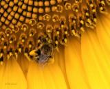 Pollen Loaded