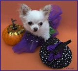Bailey does Halloween