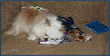 Napping on the Card Reader