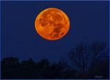 Beaver Super Moon