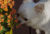 Bailey and the Kalanchoe