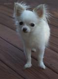 Sweet Bailey