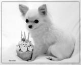 Bailey's 3rd Birthday