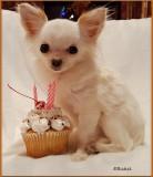 Bailey's Birthday #3