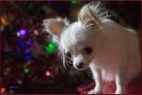 Bailey on Christmas Day