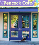 Peacock Cafe