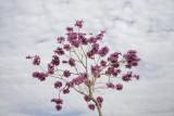 Spring Blossoms in Herzliya
