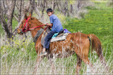 Using horse to herd sheep and goats.