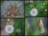 macro weeds.jpg