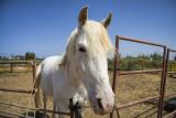 portrait of a horse.jpg