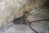 Stray Kitten.jpg