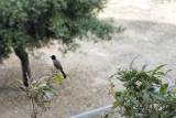 Morning Visitor.jpg
